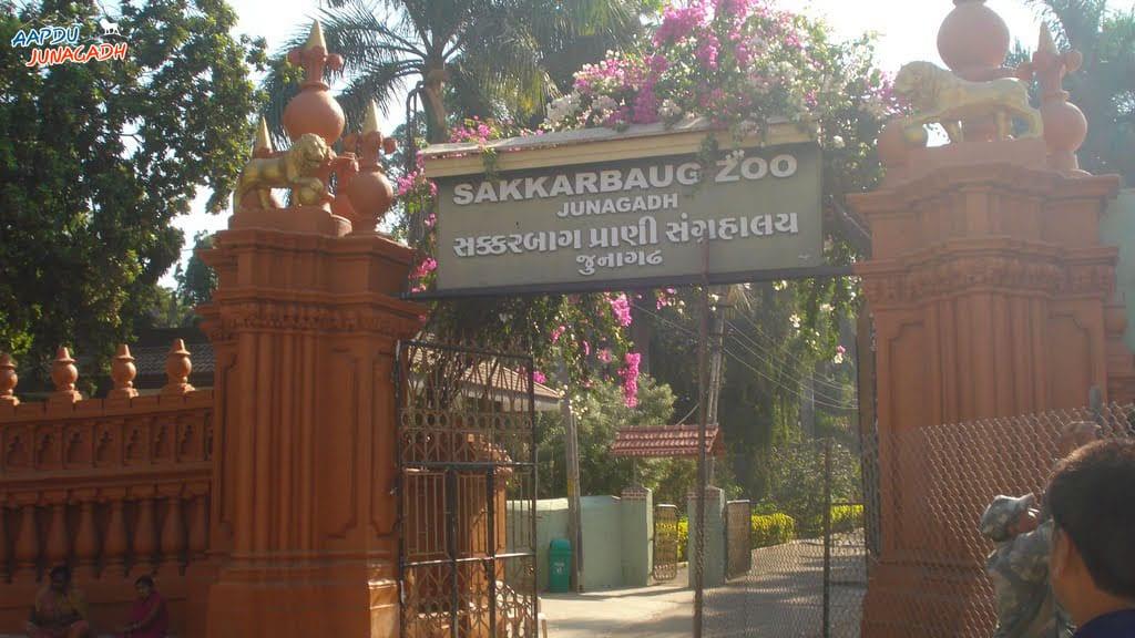 Sakkarbaug Zoo- Top 10 place in Junagadh