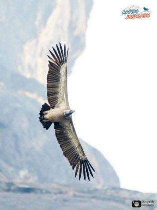 BirdsinJunagadh